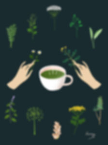 קארין סטאר_צמחים לתה של מכשפה.jpg