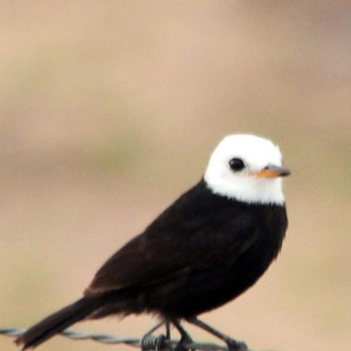 aves_08