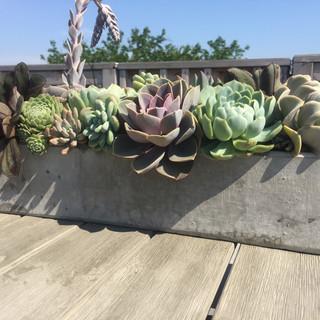 Succulent Table Top Arrangement
