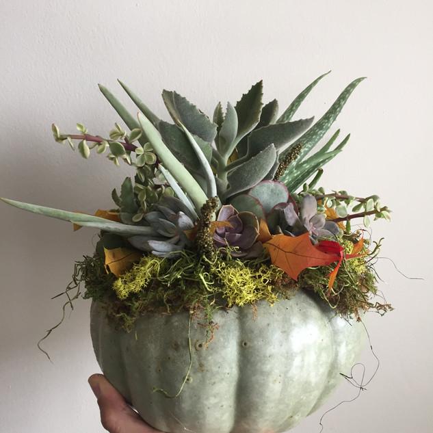 Succulent Pumpkin Living Arrangement