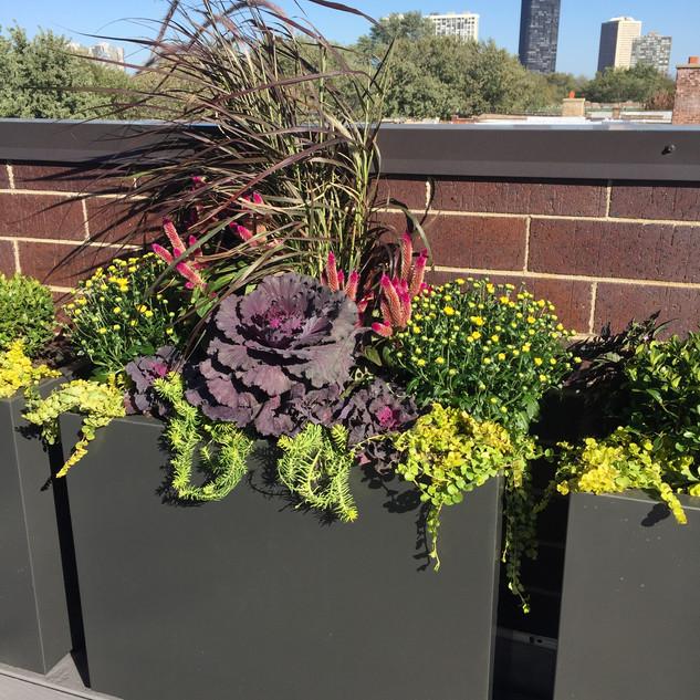 Roof Top Plantings