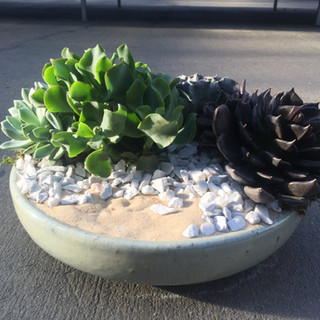 Low Bowl Planter