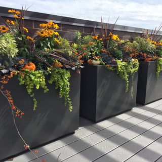 Fall Containers on Roof Top