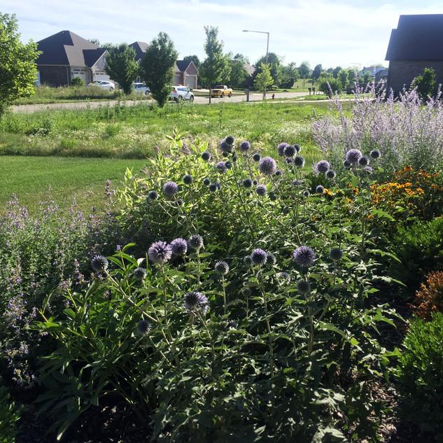 Prairie Style Garden