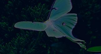 Moth Webinar Presentation.png