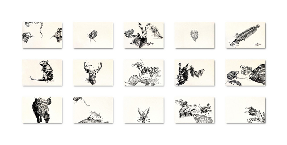 Invasive Species 2 | Find Them