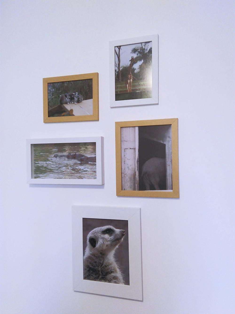 fotos animais emolduradas