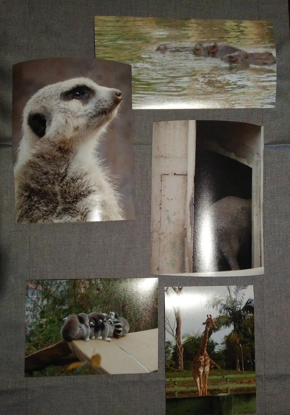 fotos animais captadas pelo meu marido
