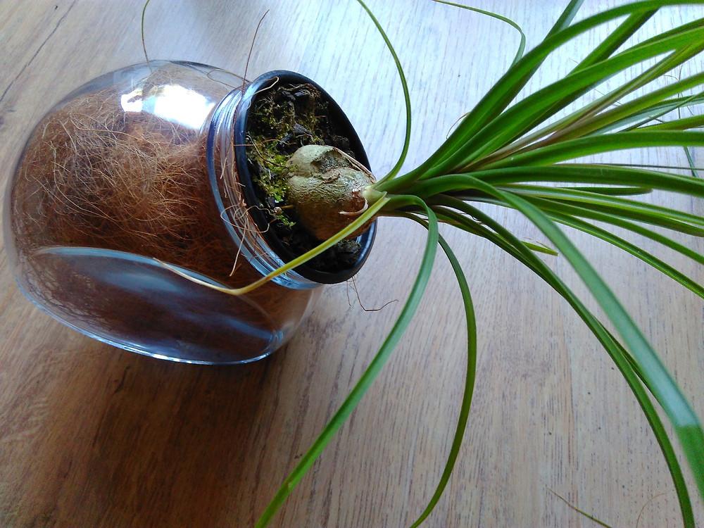 novo uso de baleiro - vaso - upcycling