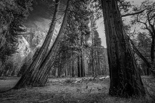Fall Light, Yosemite National Park, California. 2017