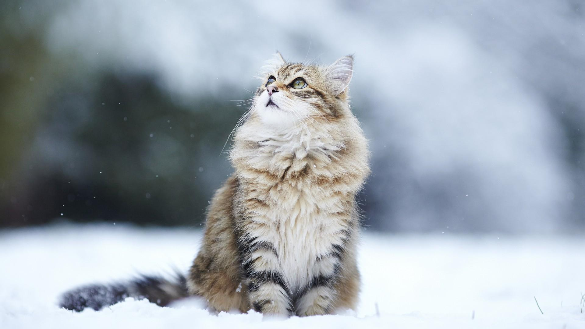cute-cat-in-the-snow