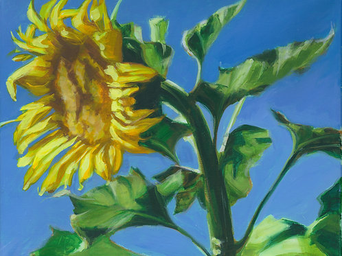 Flower of the Sun II