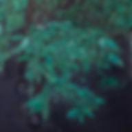 Bloom-mule.jpg