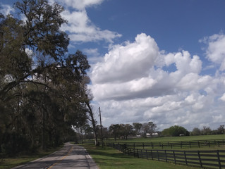 Micanopy 1 (3 hours) - FREE
