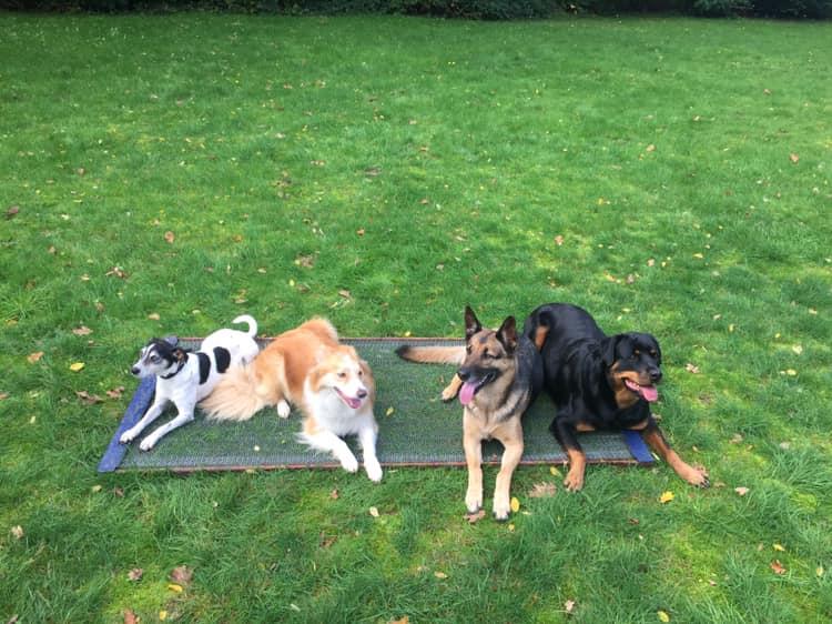 Stig, Nora, Fara & Roxy
