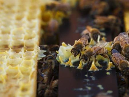 """일본, 제초제 성분 '글리포세이트' 미량 검출된 """"뉴질랜드 꿀"""" 거부"""