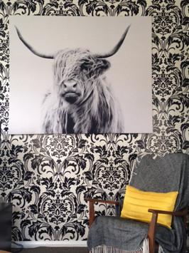 Highland Cow interior photo