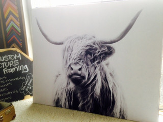 canvas for sale new plymouth