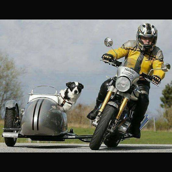 Lean In  #norton #sidecar #dogonmotorcyc