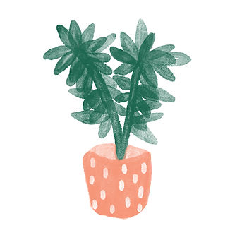 katie byrne plant illustration