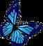 vlinder blauw.png