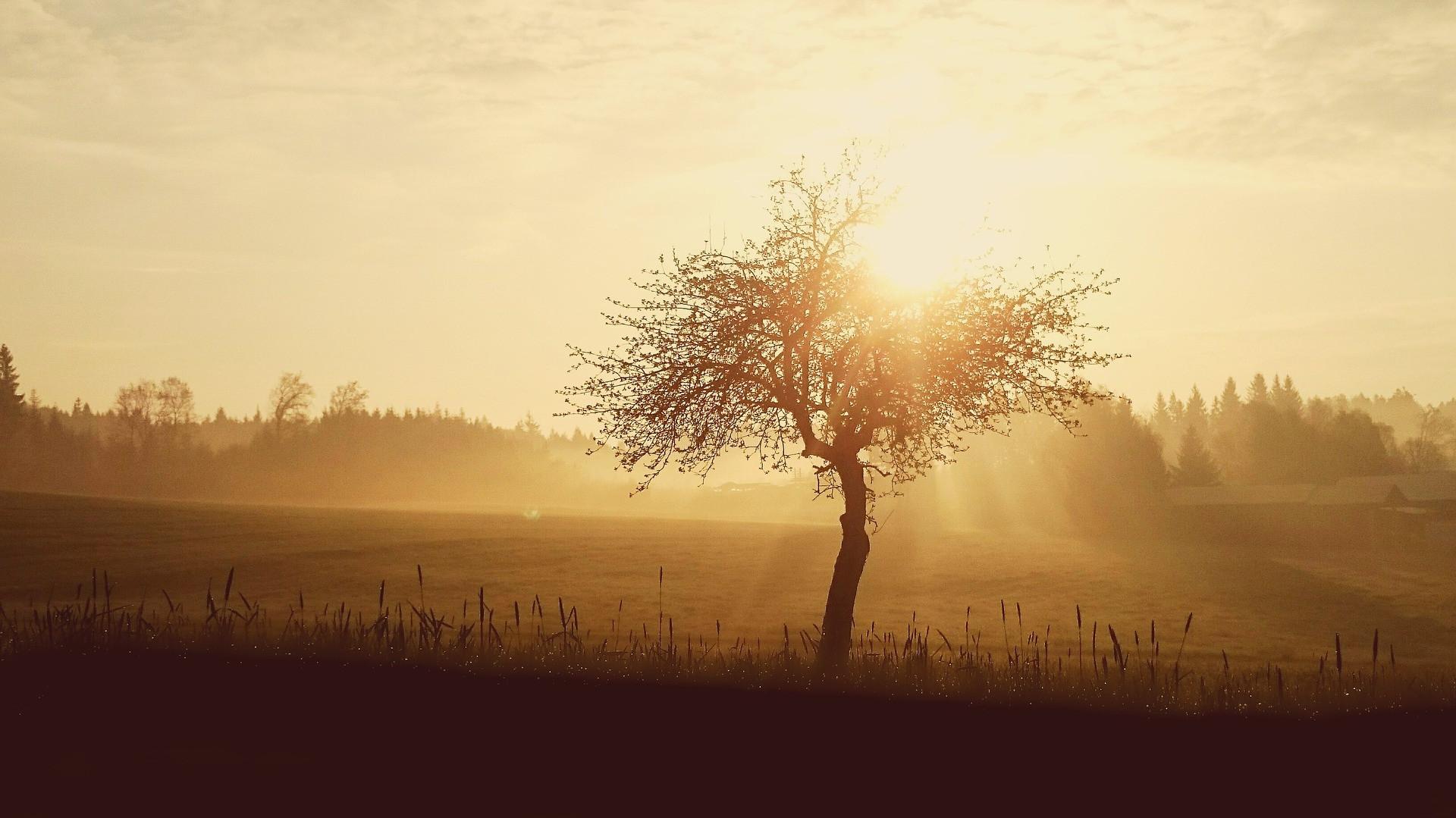 sunrise-1409090_1920.jpg