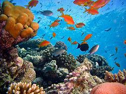 diving-712634.jpg