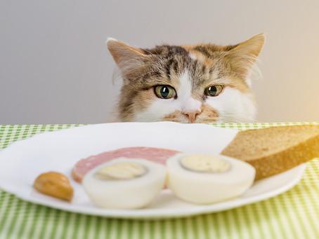 Pericoli in cucina: gli alimenti (più o meno noti) tossici per il gatto