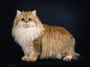 Anatomia del gatto
