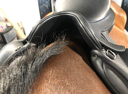 how to photograph Horse 6.jpg