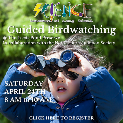 Guided Birdwatching (2).png