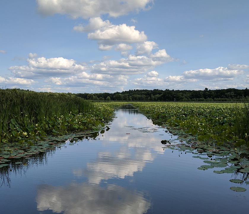 Wild swimming Hertfordshire.