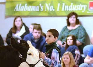 Farmers Federation to Lead Alabama Jr. Beef Expo