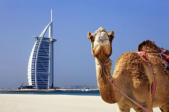 dubai and camel.jpg