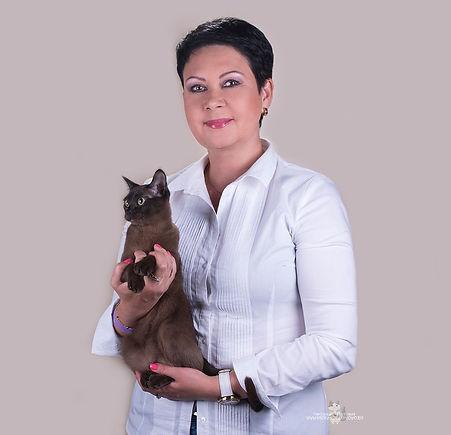 Европейская Бурма.Продажа котят Европейской Бурмы.