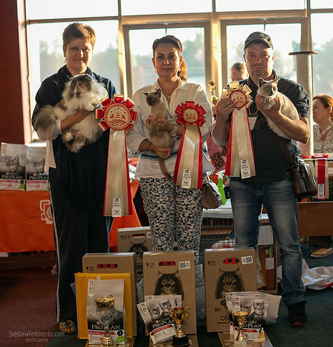 Выставка кошек Кубок Соснового Бора _Рус