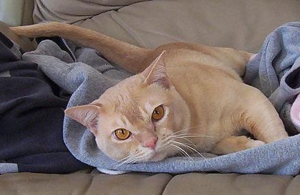 красный кот.jpg