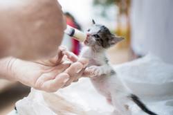 Кормление новорожденного котенка