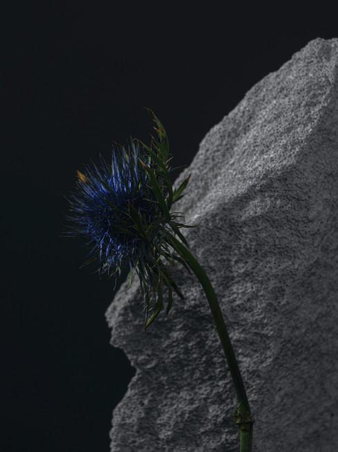 Still Life_2_web.jpg