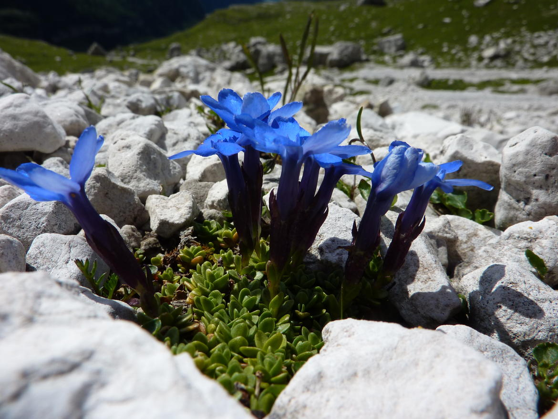 Parco-naturale-Adamello-Brenta_imagefullwide (2)