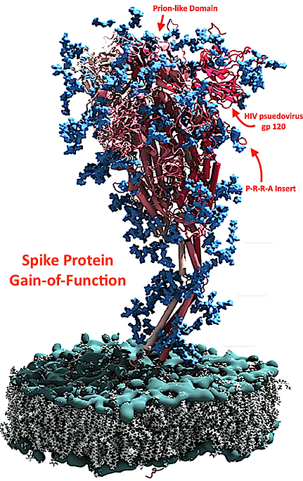 Spike Protein GoF.png