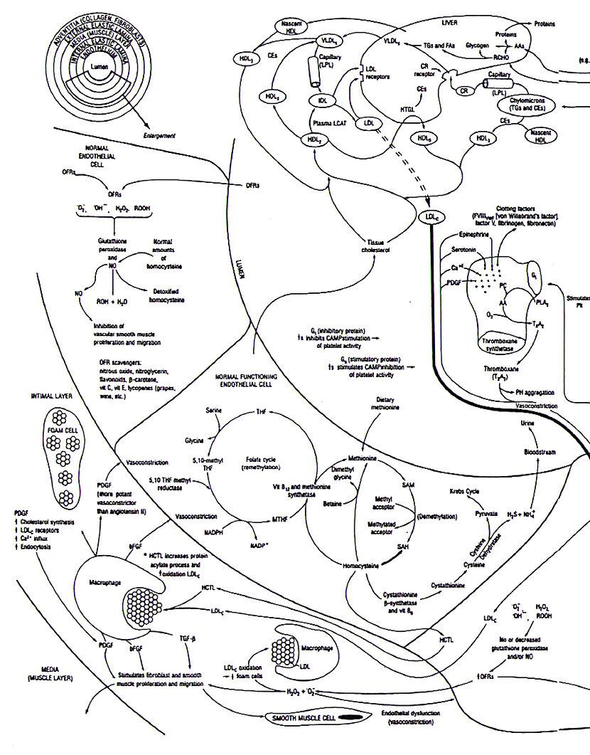 Fleming InflammoThrombotic Response (ITR) Theory.jpg