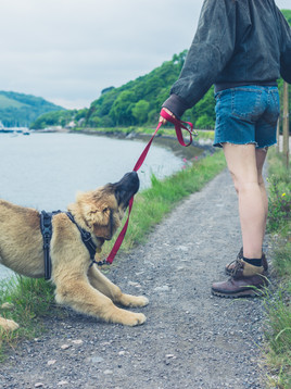 The Biggest Mistakes You Might Be Making on Walks