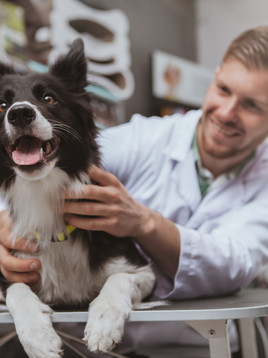 Pet Insurance: Worth it, or a Waste?