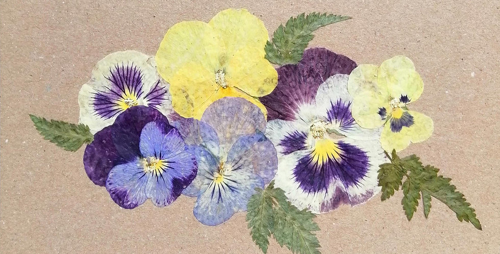 Pansy Card D