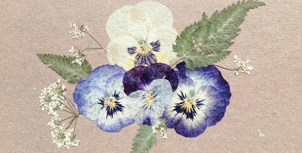 Pansy Card A