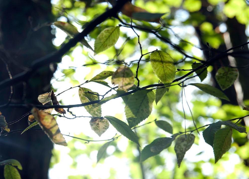 Le soleil derrière les branches d'un arbre: gardez espoir en vous.