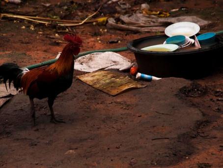 Ce que vous pouvez faire pour consommer des produits d'origine animal de manière plus responsabl