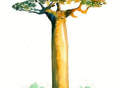 Les intérêts de la pulpe de baobab pour votre santé.