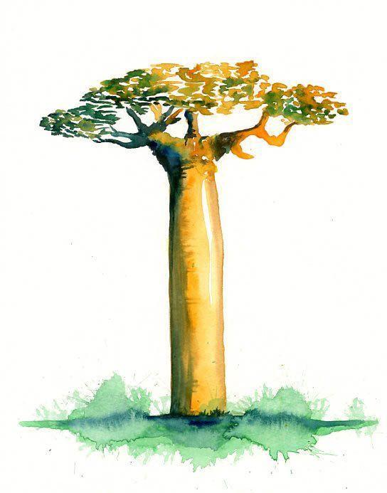 Baobab en aquarelle - auteur inconnu